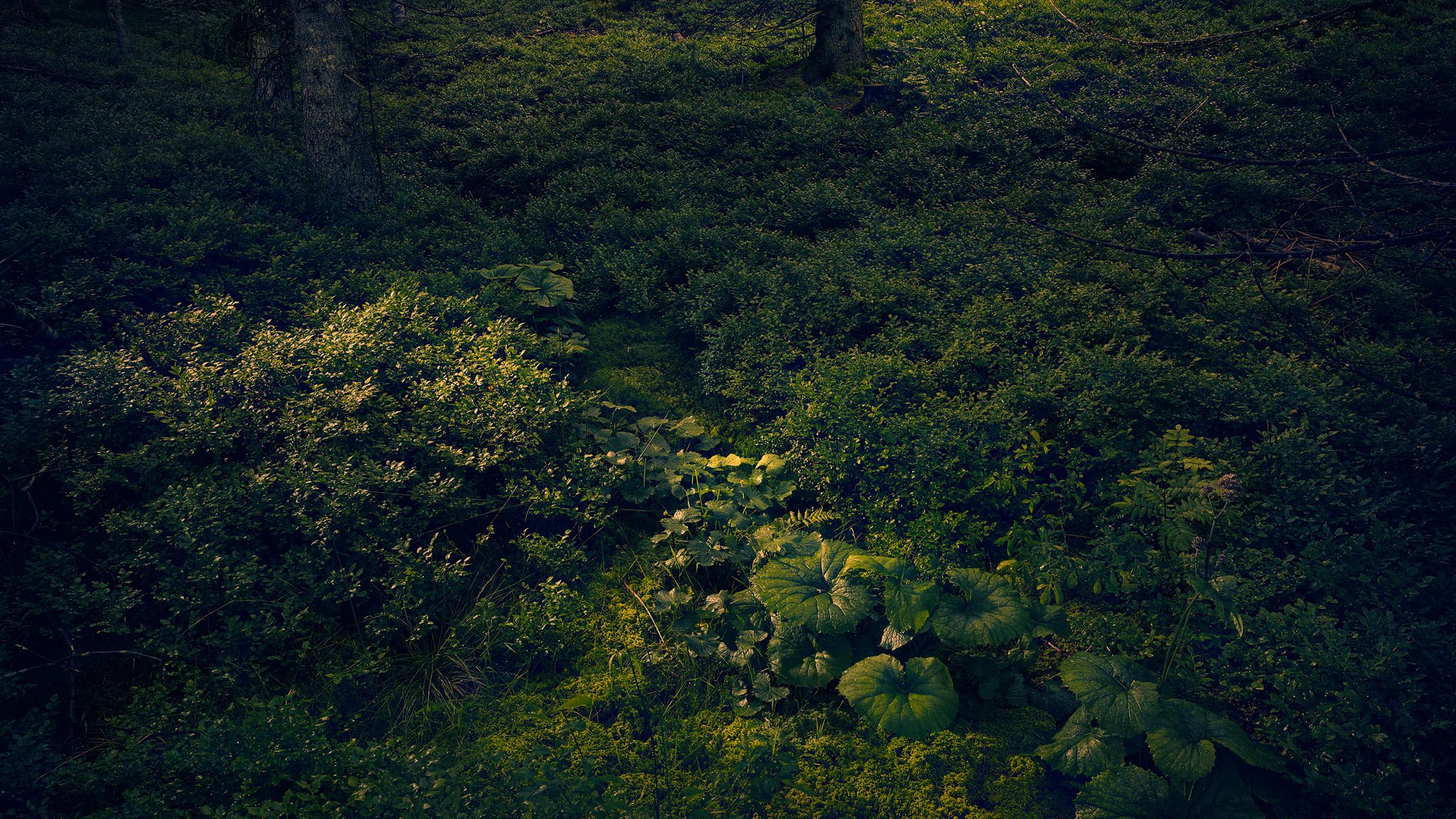 BLACK_FOREST_ERIK_CHMIL_01